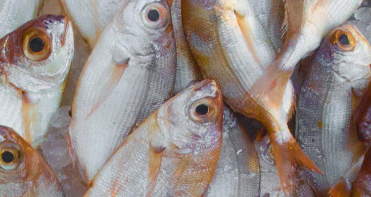 Fisch als Vitamin D Lieferant